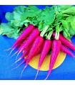 Rabanito Oriental Rosa 2 -semillas no tratadas