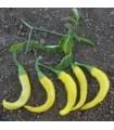 Pimiento Picante Cayena Dorada- semillas no tratadas
