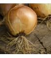 Cebolla Sturon - semillas sin tratamiento