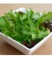 Lechuga Baby Leaf Mix - semillas no tratadas