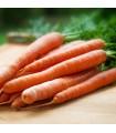 Zanahoria Nantes 2 - semillas no tratadas