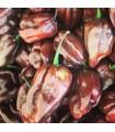 Habanero chocolate- semillas no tratadas
