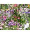 Mezcla de flores para las abejas - semillas no tratadas